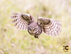 How-to-capture-birds-in-flight-Wildlife-Photography-Tutorial