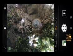 MACRO-Smartphone-Photography