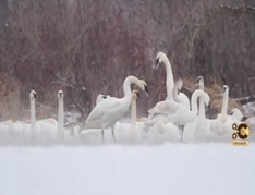 Wildlife-Photography-Pro-Tips-#1-Winter-Wildlife!