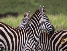 Wildlife-Photography-Tips-and-Tricks