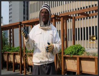 """یک روز ملایم در بهار ، در پشت بام رستوران Ballard's Bastille ، بوی شیرین و تابستانی از هوا پخش شد. آیا این از کندوی عسل پشت بام نشأت می گرفت ، یا از زنبوردار که مشغول بررسی سریع زنبورها بود؟ کورکی لوستر ، صاحب شرکت زنبورستان شهری Ballard Bee Company ، ادکلن نپوشیده بود. وی اظهار داشت که بوی آن احتمالاً از بره موم کندوها ایجاد می شود - چسب چسبنده ای که از مواد مختلفی از جمله رزین های گیاهی و درختی تشکیل شده و زنبورها از آن برای پر کردن سوراخ های کندو استفاده می کنند. او می گوید: """"وقتی هوا گرم می شود بوی باورنکردنی می دهد."""""""