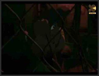 """خلاصه داستان : پسر جوانی به نام هیكورا برای بازی در """"Otokoyo"""" (یك بازی پنهانكاری كه گفته می شود بازیکنان توسط اشباح و شیاطین ربوده می شوند) برای پیدا كردن خواهر گمشده خود به ویرانه های یك شهر ممنوعه وارد می شوند. . Kakurenbo: Hide & Seek (カ ク レ ン ボ ، Kakurenbo ، روشن. """"پنهان کن و جستجو کن"""") یک فیلم کوتاه انیمیشن سایه بان ژاپنی است که به نویسندگی و کارگردانی Shuhei Morita ساخته شده است. این فیلم شامل یک بازی از """"Otokoyo"""" (Hunt ト コ ヨ ، روشن مرد شکار) ، نسخه ای از پنهان کاری است که کودکان با ماسک روباه ، در نزدیکی ویرانه های یک شهر متروکه قدیمی الهام گرفته از Kowloon بازی می کنند. بچه هایی که این بازی را می کنند ناپدید می شوند ، اعتقاد بر این است که شیاطین روح آنها را دور می کند. کاکورنبو پسران هیکورا را دنبال می کند که با امید یافتن خواهر گمشده خود ، سورینچا ، به این بازی می پیوندد. داستان در این ایده ساخته شده است که توکیو زیبایی طبیعی خود را از دست می دهد ، که شامل بازی های کودکانه مانند پنهانکاری برای پیشرفت صنعتی است ، به عنوان مثال روشن کردن شهر توکیو با هزینه بی گناهی"""